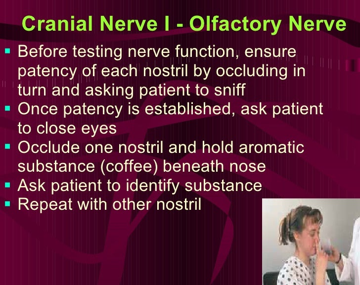 Cranial Nerve I - Olfactory Nerve   <ul><li>Before testing nerve function, ensure patency of each nostril by occluding in ...