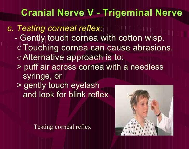 Cranial Nerve V - Trigeminal Nerve <ul><li>c. Testing corneal reflex:  </li></ul><ul><li>- Gently touch cornea with cotton...
