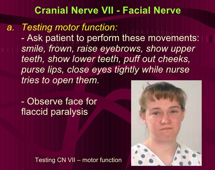 Cranial Nerve VII - Facial Nerve <ul><li>Testing motor function:  </li></ul><ul><li>- Ask patient to perform these movemen...