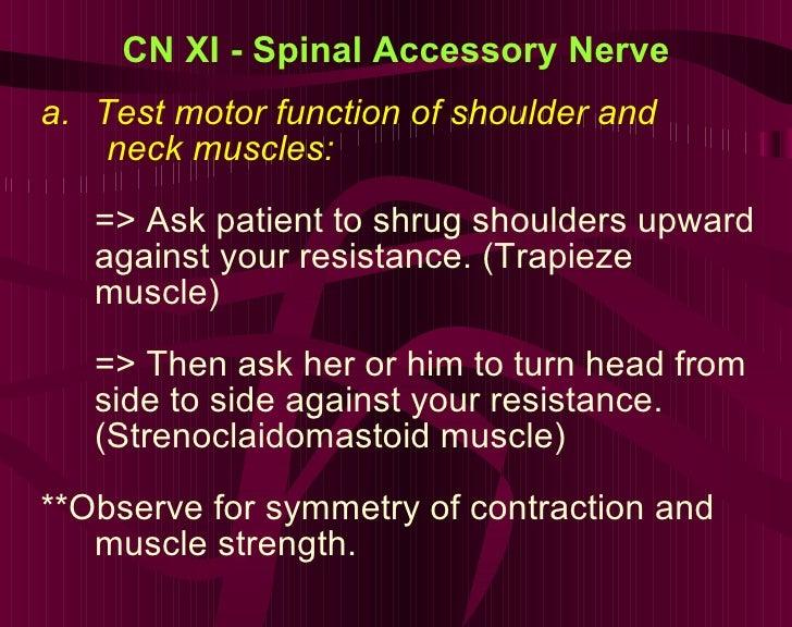 CN XI - Spinal Accessory Nerve <ul><li>Test motor function of shoulder and  </li></ul><ul><li>neck muscles:  </li></ul><ul...