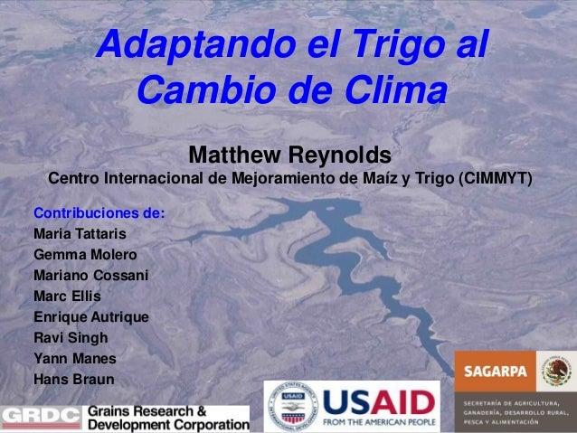 Adaptando el Trigo al Cambio de Clima Matthew Reynolds Centro Internacional de Mejoramiento de Maíz y Trigo (CIMMYT) Contr...