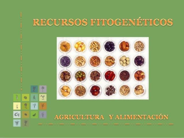 GENERALIDADES  Los recursos fitogenéticos constituyen un patrimonio de la humanidad de valor incalculable y su pérdida es...