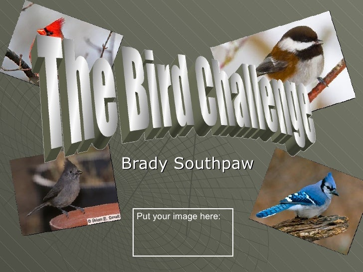 Brady Southpaw Put your image here: The Bird Challenge