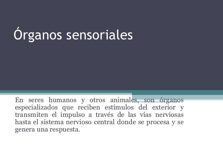 Órganos sensoriales En seres humanos y otros animales, son órganos especializados que reciben estímulos del exterior y tra...