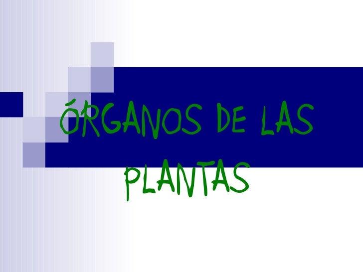 ÓRGANOS DE LAS   PLANTAS