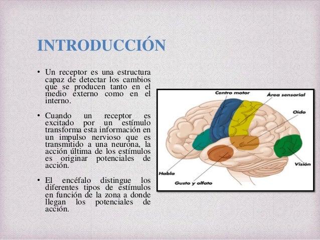 ANATOMIA Y FISIOLOGÍA SABATINO Y NOCTURNO: Órganos de los Sentidos