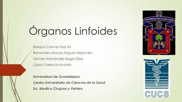 Órganos Linfoides Barajas Cuevas Sayl Ali Benavides Macías Miguel Alejandro Gómez Hernández Sergio Elías López Valencia An...