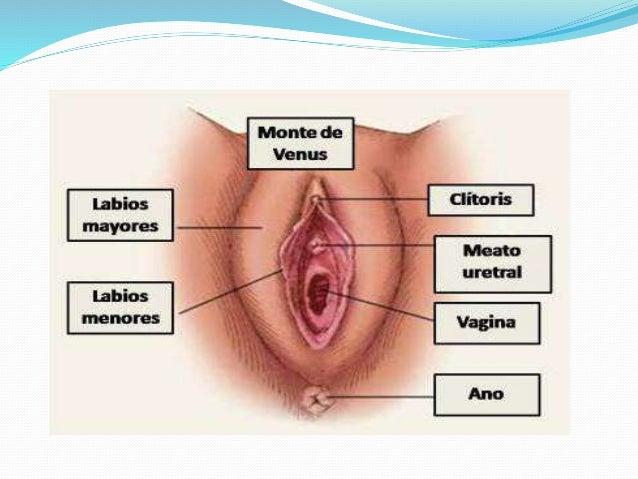 Organos Sexuales 94