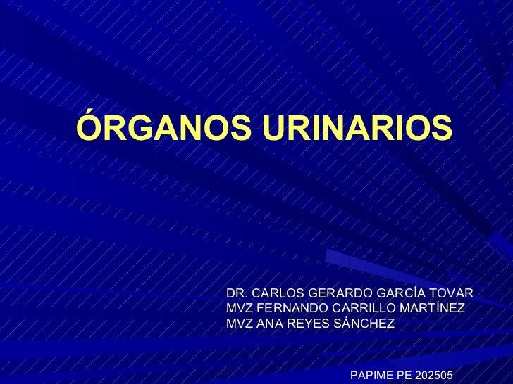 ÓRGANOS URINARIOS      DR. CARLOS GERARDO GARCÍA TOVAR      MVZ FERNANDO CARRILLO MARTÍNEZ      MVZ ANA REYES SÁNCHEZ     ...