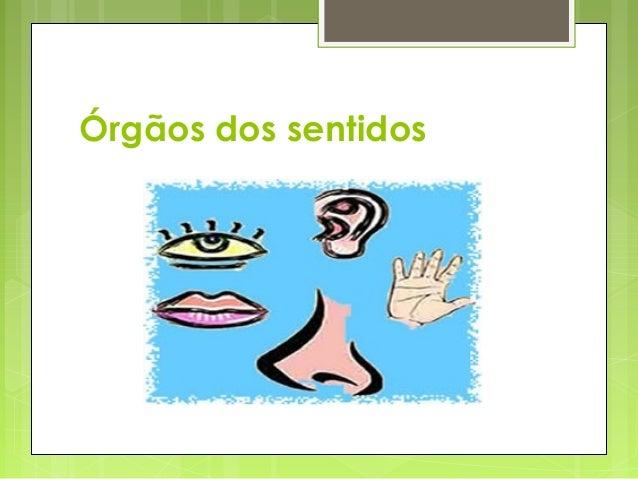 Órgãos dos sentidos