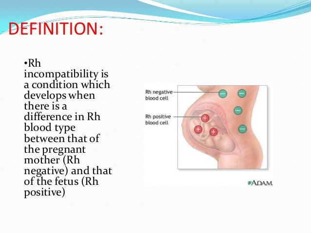 immunological relationship between mother and fetus