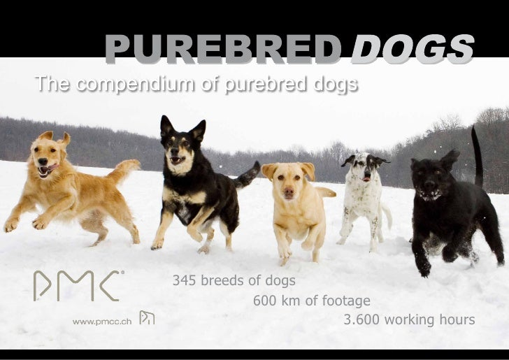345 breeds of dogs             600 km of footage                          3.600 working hours