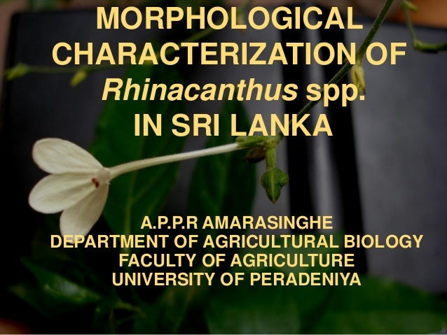 MORPHOLOGICALCHARACTERIZATION OF  Rhinacanthus spp.    IN SRI LANKA        A.P.P.R AMARASINGHEDEPARTMENT OF AGRICULTURAL B...