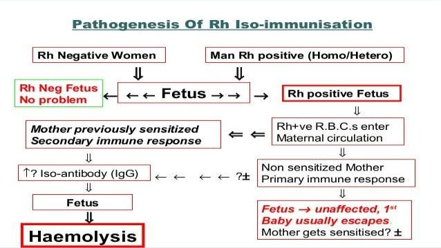 Rhesus Blood Factor and Rh-Conflict