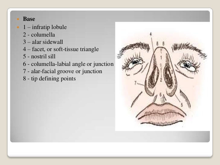 Rhinoplasty Nose Anatomy