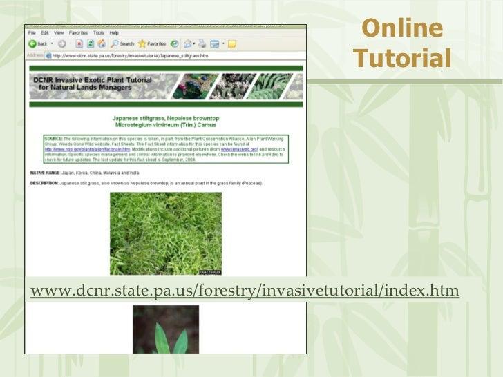 PA Invasive Plants and AlterNATIVES