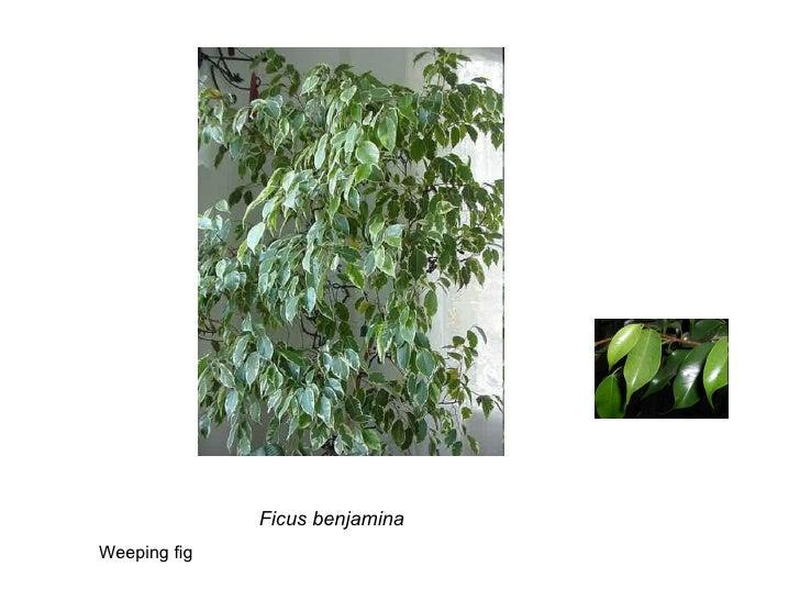 Weeds Slide 2