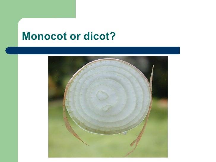 Monocot or dicot?