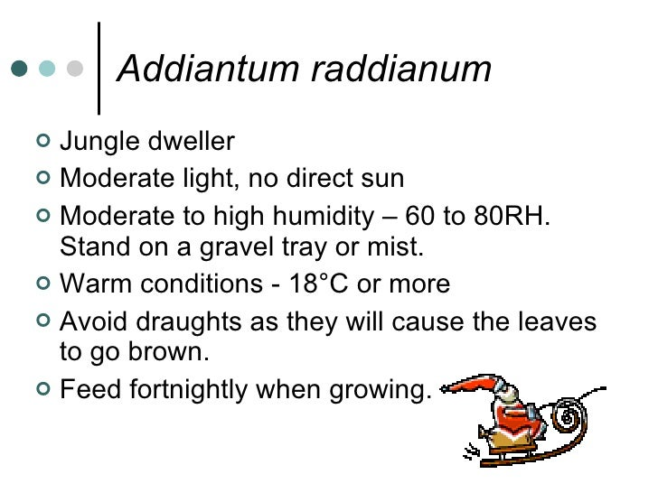Addiantum raddianum <ul><li>Jungle dweller </li></ul><ul><li>Moderate light, no direct sun </li></ul><ul><li>Moderate to h...