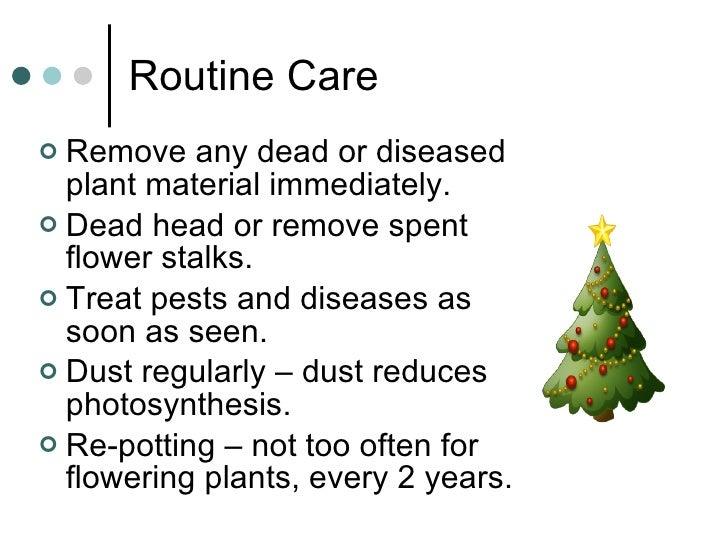 Routine Care <ul><li>Remove any dead or diseased plant material immediately. </li></ul><ul><li>Dead head or remove spent f...