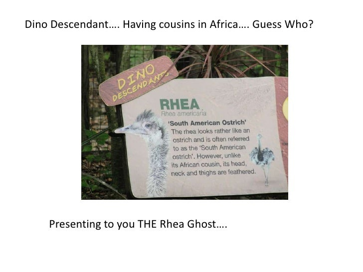 Dino Descendant…. Having cousins in Africa…. Guess Who?<br />Presenting to you THE Rhea Ghost….<br />