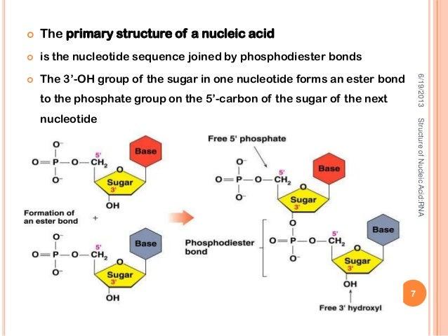 acid ribonucleic