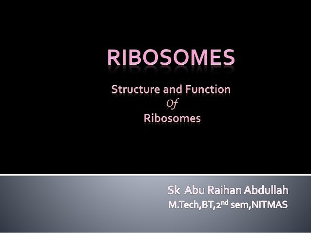  Cell have tiny granular structures known as Ribosomes  Ribosomes are Ribonucleo-Protein Particles  Ribosomes serves as...