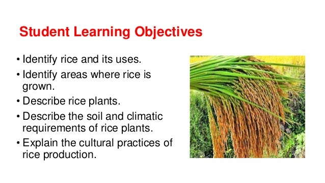 Rice for Soil and its uses