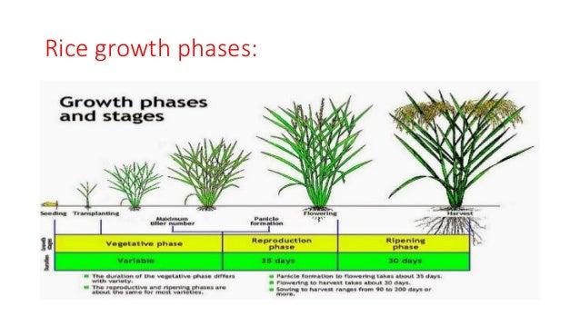 Process occurs