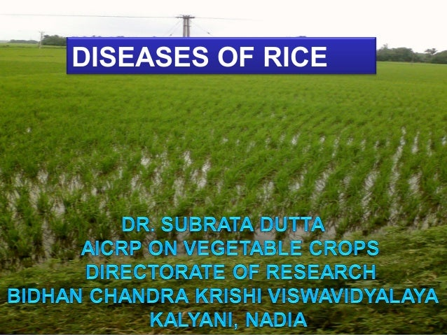 DISEASES OF RICE