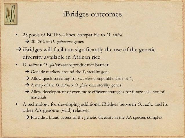 iBridges outcomes• 25 pools of BC1F3-4 lines, compatible to O. sativa 20-25% of O. glaberrima genesiBridges will facilit...