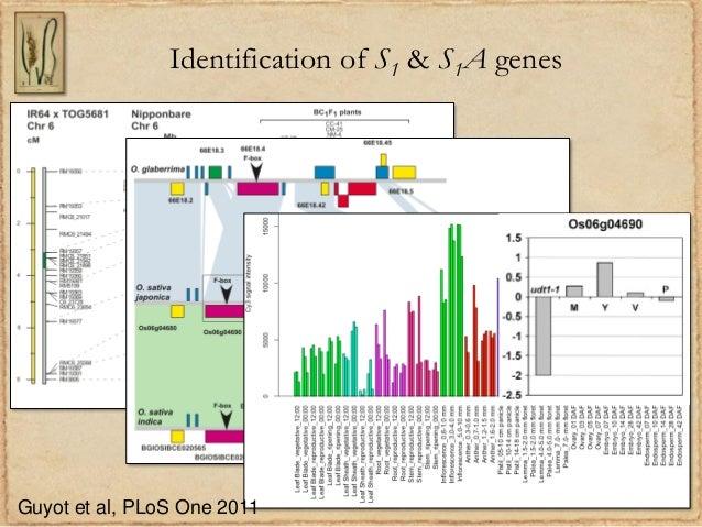 Identification of S1 & S1A genesGuyot et al, PLoS One 2011