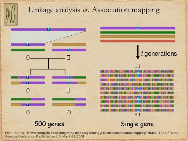 Linkage analysis vs. Association mappingMMMMMMMMMt generationsMMMMMM500 genes Single geneFrom: Yu et al - Power analysis o...