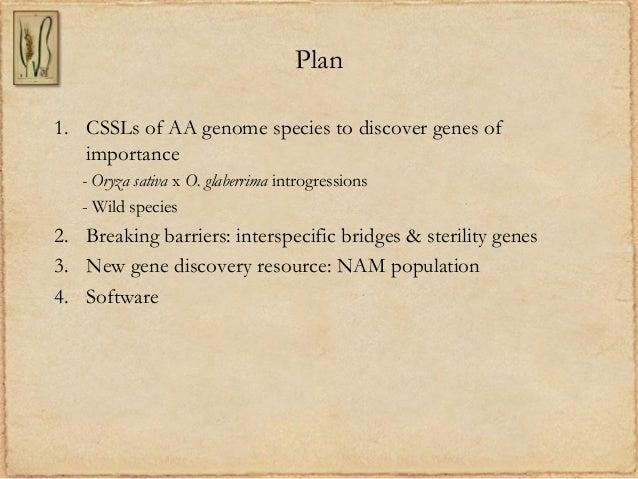 Plan1. CSSLs of AA genome species to discover genes ofimportance- Oryza sativa x O. glaberrima introgressions- Wild specie...
