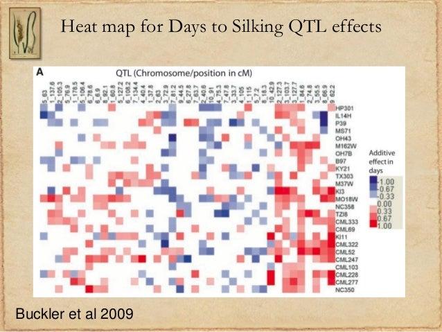 Heat map for Days to Silking QTL effectsBuckler et al 2009