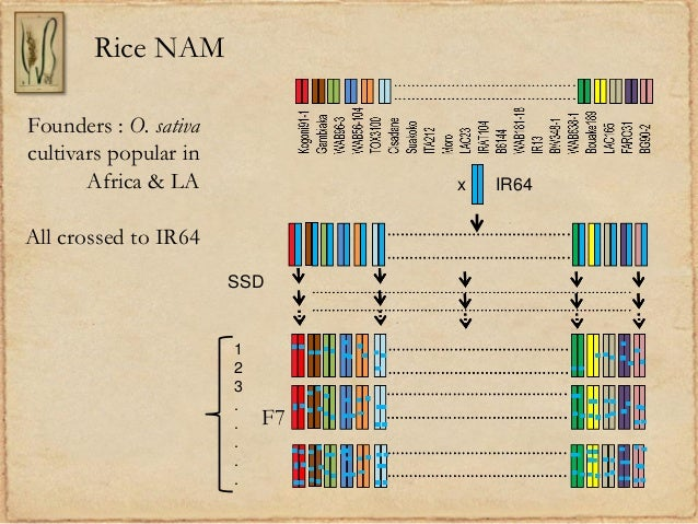 Rice NAMx IR64Founders : O. sativacultivars popular inAfrica & LAAll crossed to IR64SSDF7123.....