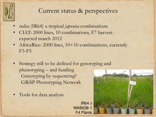 Current status & perspectives• indica (IR64) x tropical japonica combinations• CIAT: 2000 lines, 10 combinations, F7 harve...