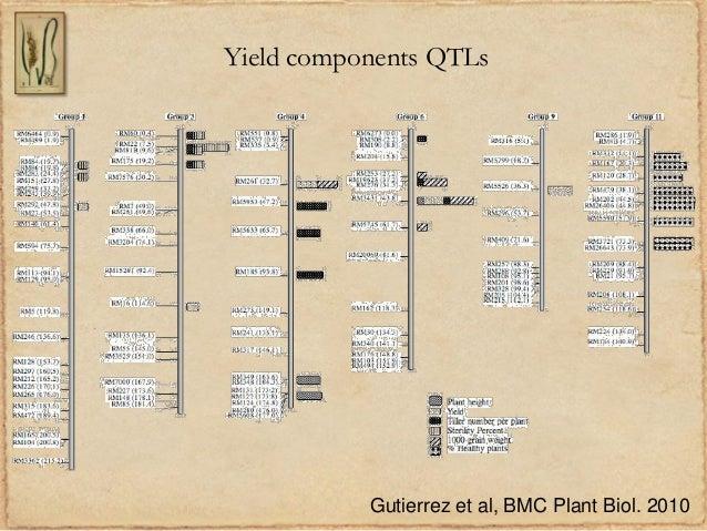 Yield components QTLsGutierrez et al, BMC Plant Biol. 2010