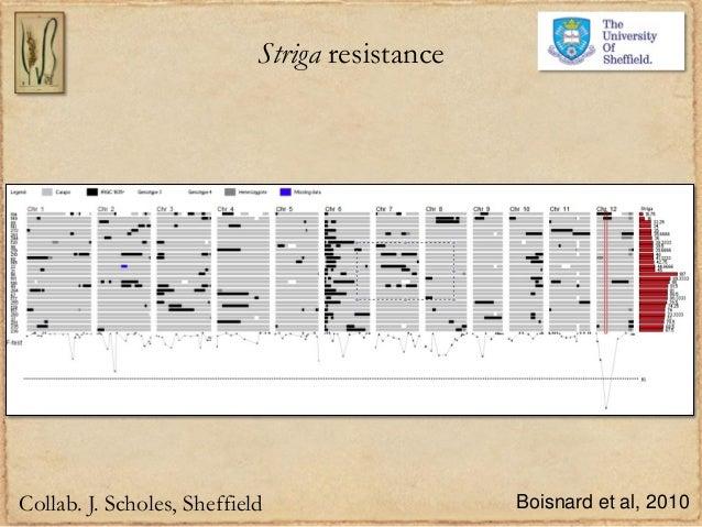 Striga resistanceCollab. J. Scholes, Sheffield Boisnard et al, 2010