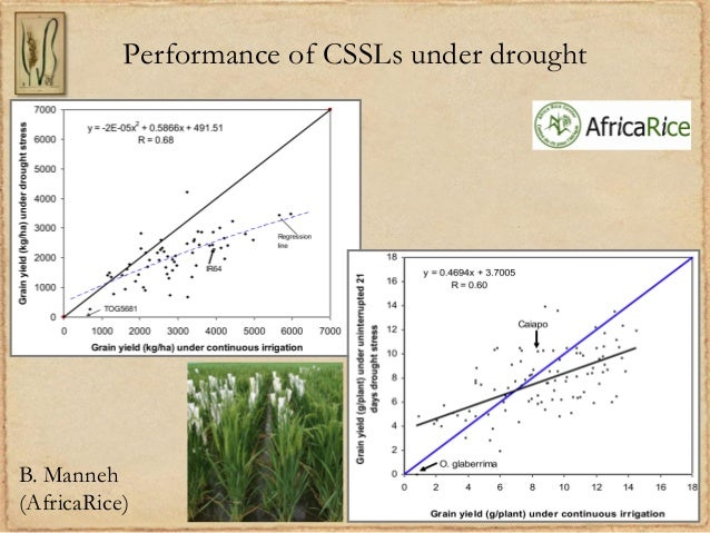 Performance of CSSLs under droughtB. Manneh(AfricaRice)