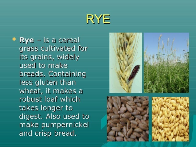 RYERYE  RyeRye – is a cereal– is a cereal grass cultivated forgrass cultivated for its grains, widelyits grains, widely u...