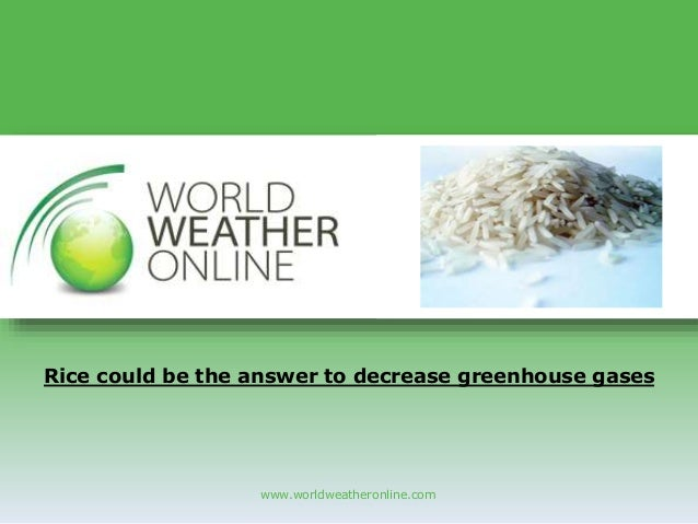 www.worldweatheronline.com Rice could be the answer to decrease greenhouse gases