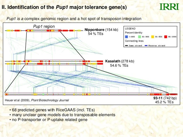 Pup1 region93-11 (742 bp)Kasalath (278 kb)Nipponbare (154 kb)Connecting linesPercent identityLEGEND• 68 predicted genes wi...