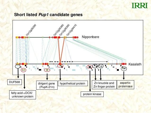 2029Kasalath4, 5Nipponbare6753491protein kinasehypothetical proteindirigent gene(PupK-21n)fatty acid DOX/unknown proteina...