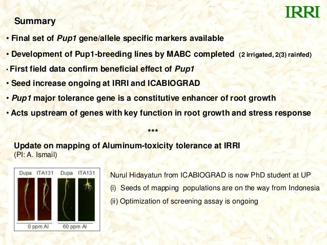 Summary• Final set of Pup1 gene/allele specific markers available• Development of Pup1-breeding lines by MABC completed (2...