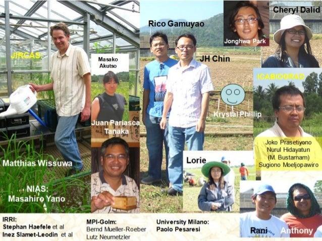 GRM 2011: Rice with dual strength -- Phosphorus uptake efficiency and alumunium tolerance