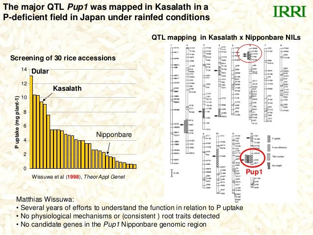 The major QTL Pup1 was mapped in Kasalath in aP-deficient field in Japan under rainfed conditionsNipponbareKasalath0246810...