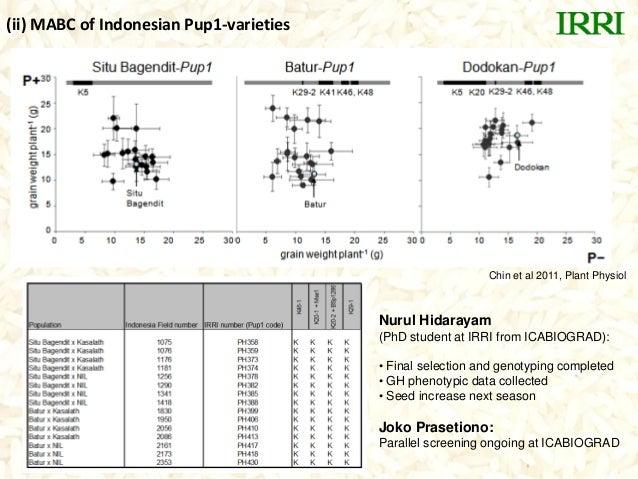 Chin et al 2011, Plant Physiol(ii) MABC of Indonesian Pup1-varietiesNurul Hidarayam(PhD student at IRRI from ICABIOGRAD):•...
