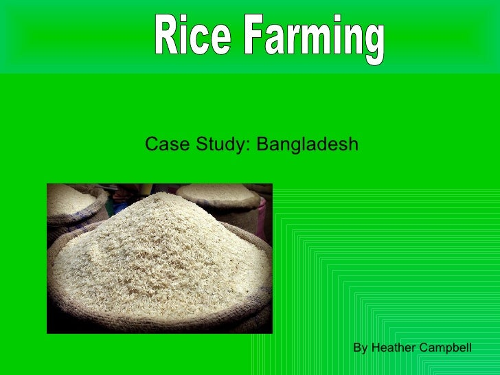 Case Study: Bangladesh By Heather Campbell Rice Farming