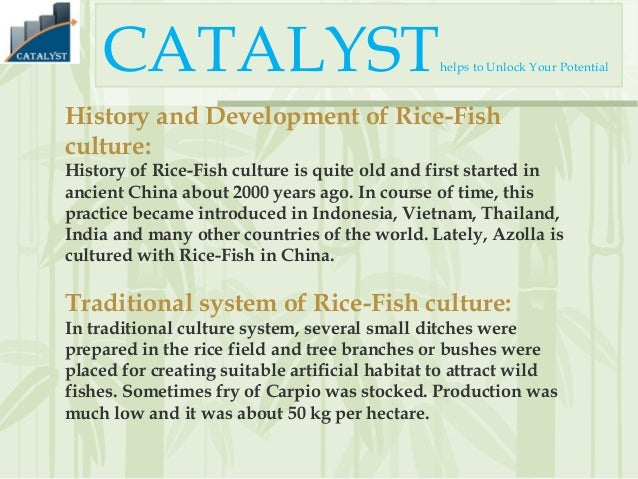 Rice and fish culture together
